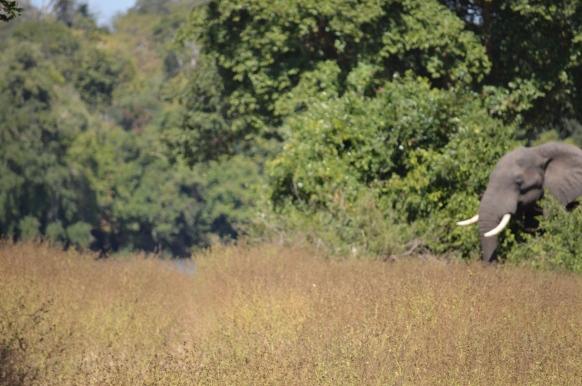 Bridgette Hathaway - Elephant in Malawi.JPG